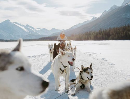 Which Sled Dog Tour is Right for You? Self-Driven or Instructor-Driven?