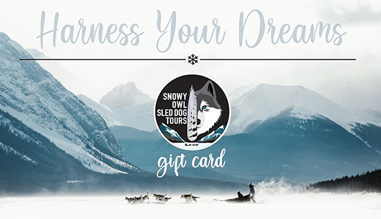 Snowy Owl Sled Dog Tours Gift Card