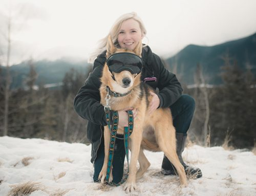 Day in the Life of Kennel Manager and Adoptions Coordinator, Mackenzie Ross