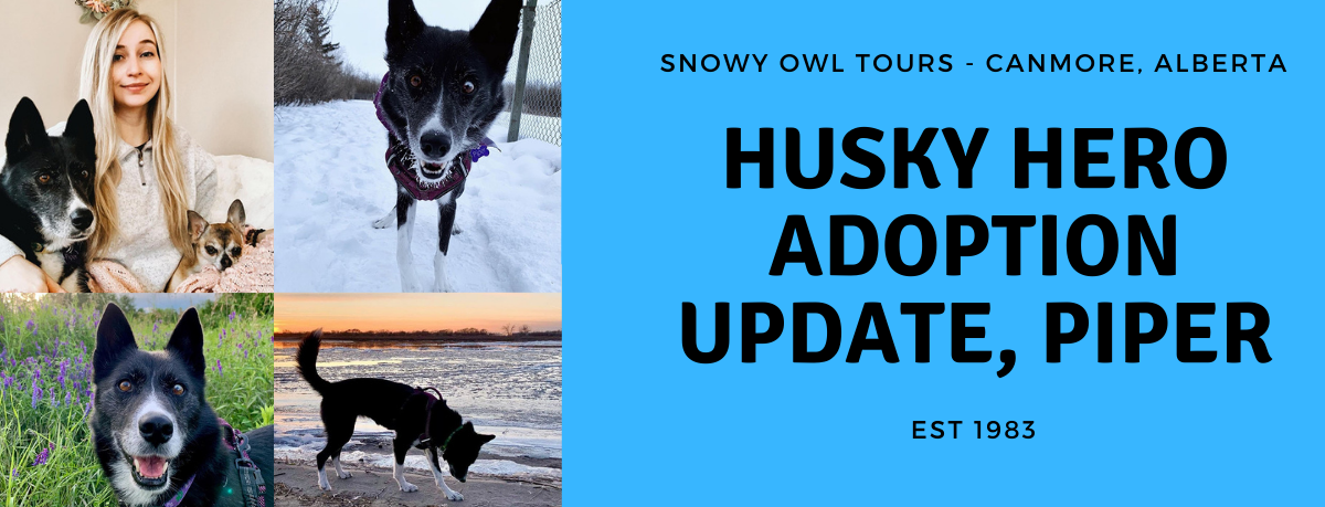 Snowy Owl Tours - Adoption Update - Piper - cover