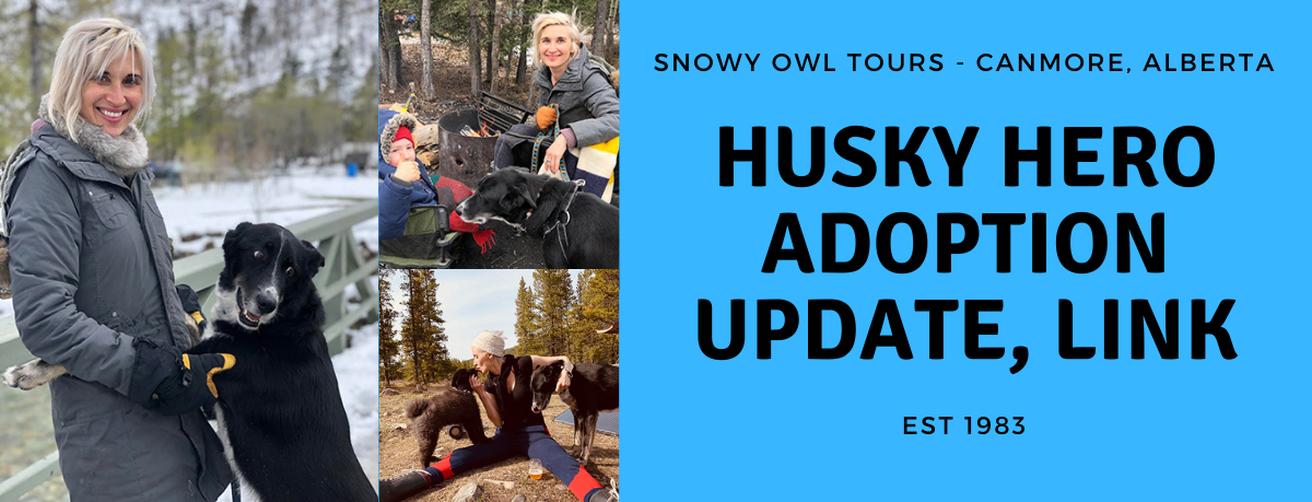 Snowy Owl Tours - Adoption Update - Link - cover
