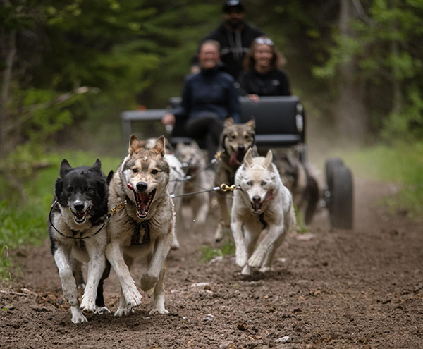 Snowy Owl Tours, Canmore, Albert - Summer Adventure Dog Carting Tour