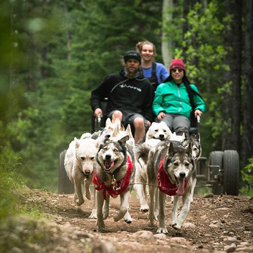 Snowy Owl Tours, Summer Adventure Dog Cart Tours, FAQs3