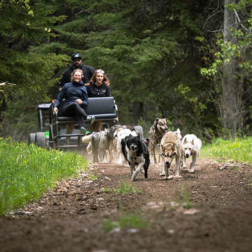 Snowy Owl Tours, Summer Adventure Dog Cart Tours, FAQs5