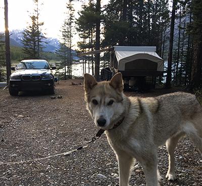 Snowy Owl Sled Dog Tours - Adoption Update - Denali - 2