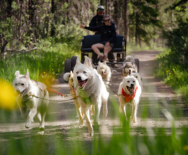 Snowy Owl Tours, Canmore, Albert - Summer Adventure Dog Carting Tour - new