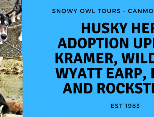Adoption Update with Husky Heroes, Kramer, Wild Bill, Wyatt Earp, Pearl and Rocksteady
